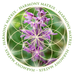 Harmony Matrix Kinesiology & Wellbeing Solutions